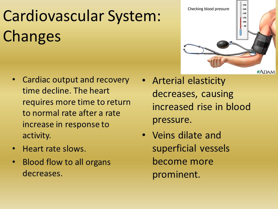 Cardiovascular System: Changes