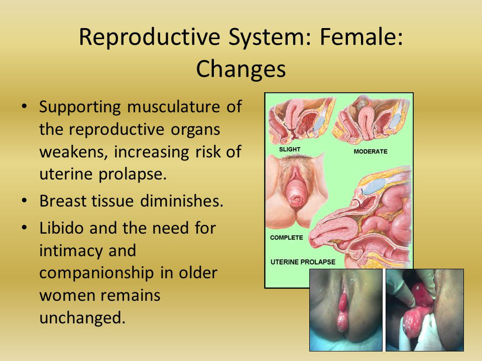 Reproductive System: Female: Changes
