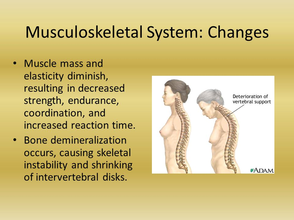 Musculoskeletal System: Changes