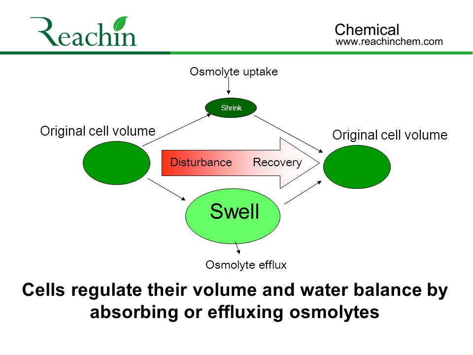Disturbance Original cell volume. Swell. Shrink. Recovery. Osmolyte efflux. Osmolyte uptake.