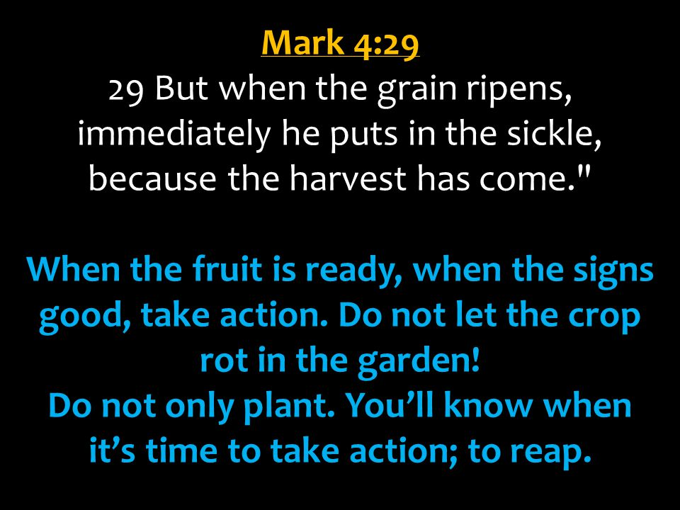 Do not only plant. You'll know when it's time to take action; to reap.