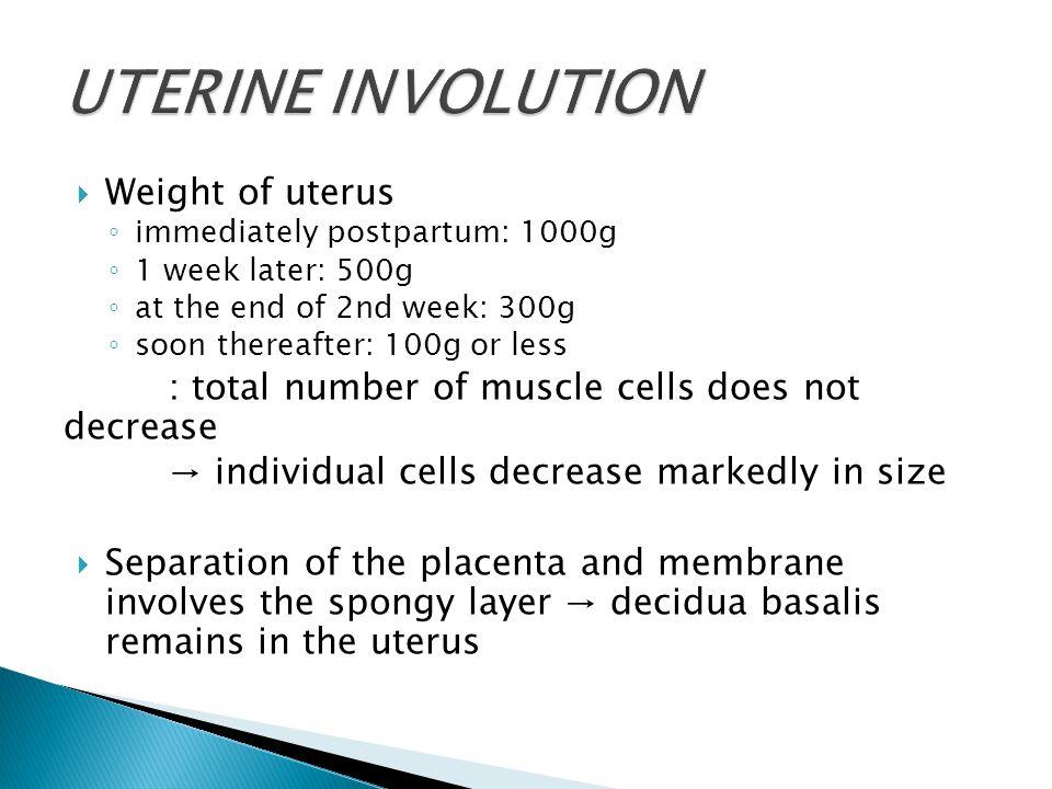 UTERINE INVOLUTION Weight of uterus