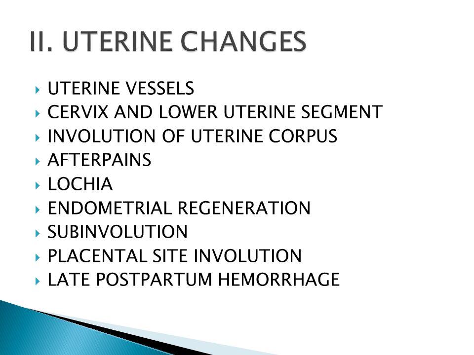 II. UTERINE CHANGES UTERINE VESSELS CERVIX AND LOWER UTERINE SEGMENT