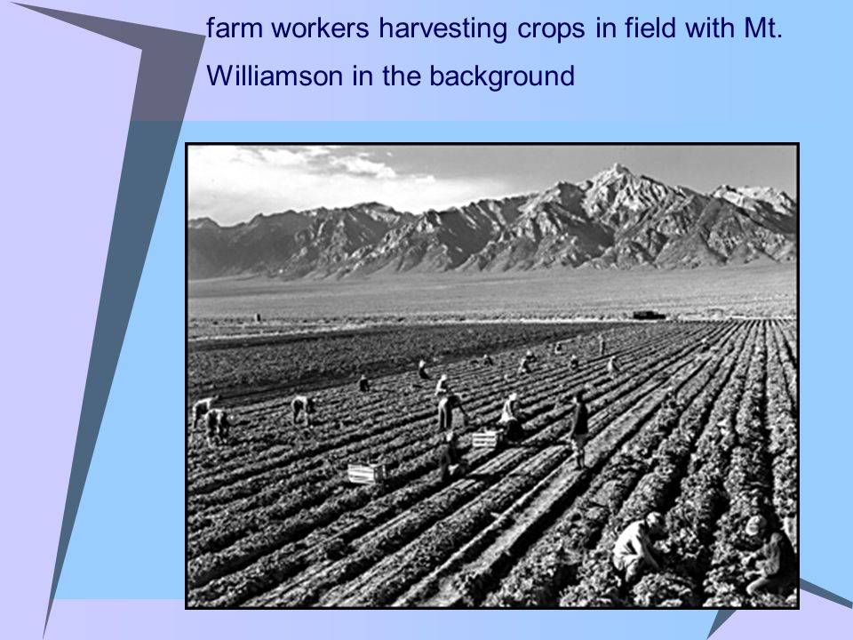 farm workers harvesting crops in field with Mt