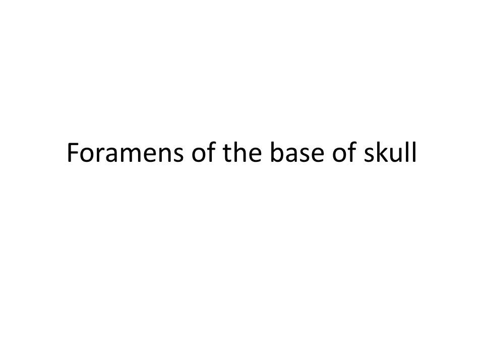 Foramens of the base of skull