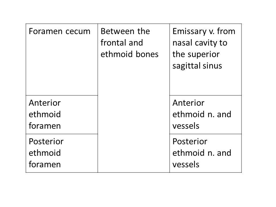 Foramen cecum Between the frontal and ethmoid bones. Emissary v. from nasal cavity to. the superior sagittal sinus.