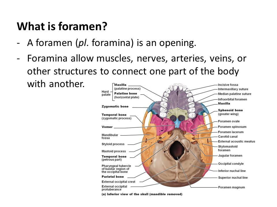 What is foramen A foramen (pl. foramina) is an opening.