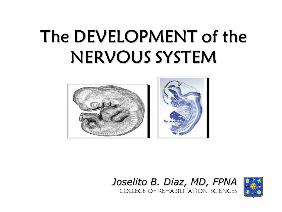 The DEVELOPMENT of the NERVOUS SYSTEM