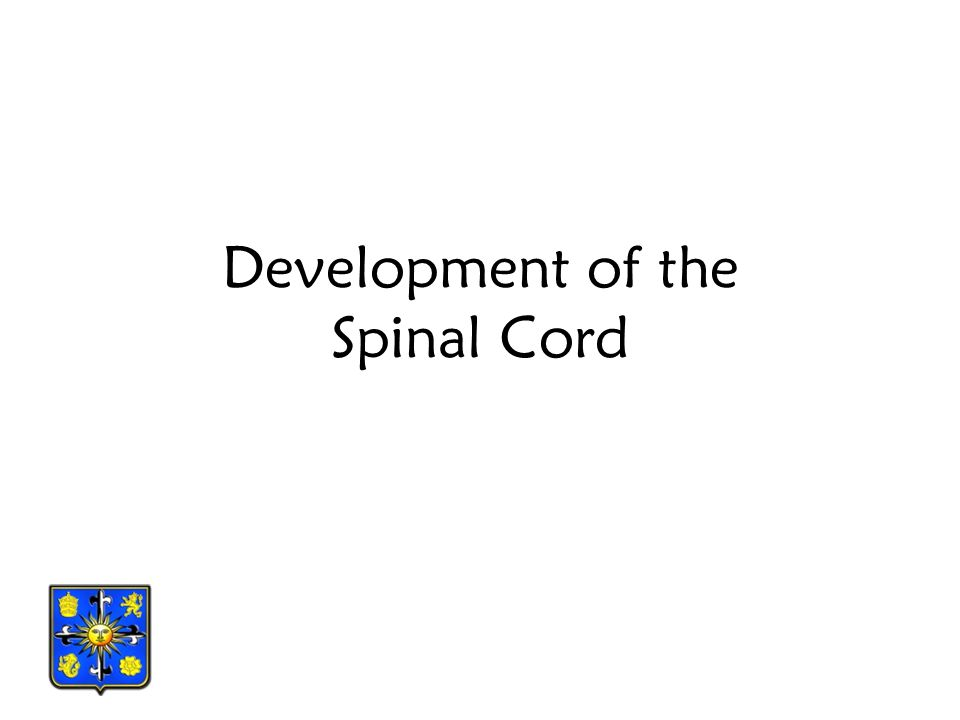 Development of the Spinal Cord