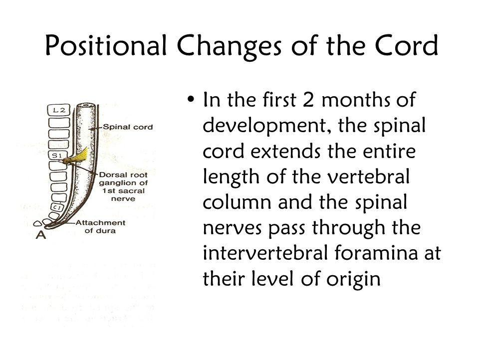 Positional Changes of the Cord