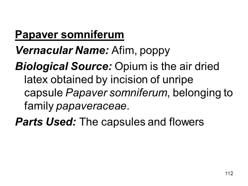 Papaver somniferum Vernacular Name: Afim, poppy.