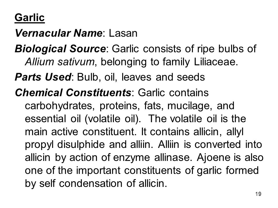 Garlic Vernacular Name: Lasan. Biological Source: Garlic consists of ripe bulbs of Allium sativum, belonging to family Liliaceae.