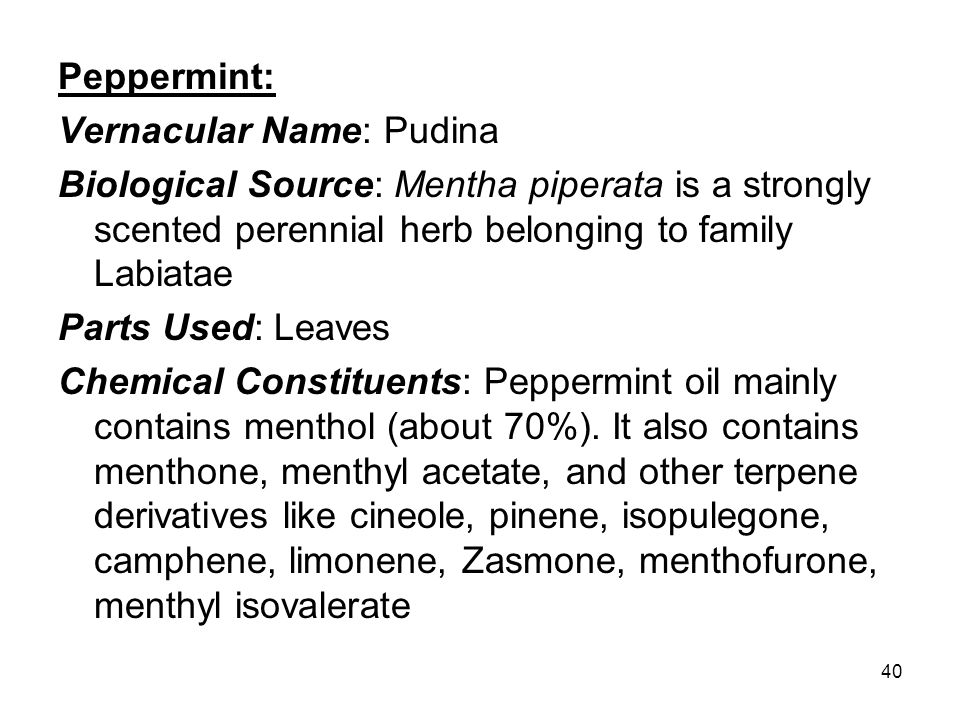 Peppermint: Vernacular Name: Pudina. Biological Source: Mentha piperata is a strongly scented perennial herb belonging to family Labiatae.