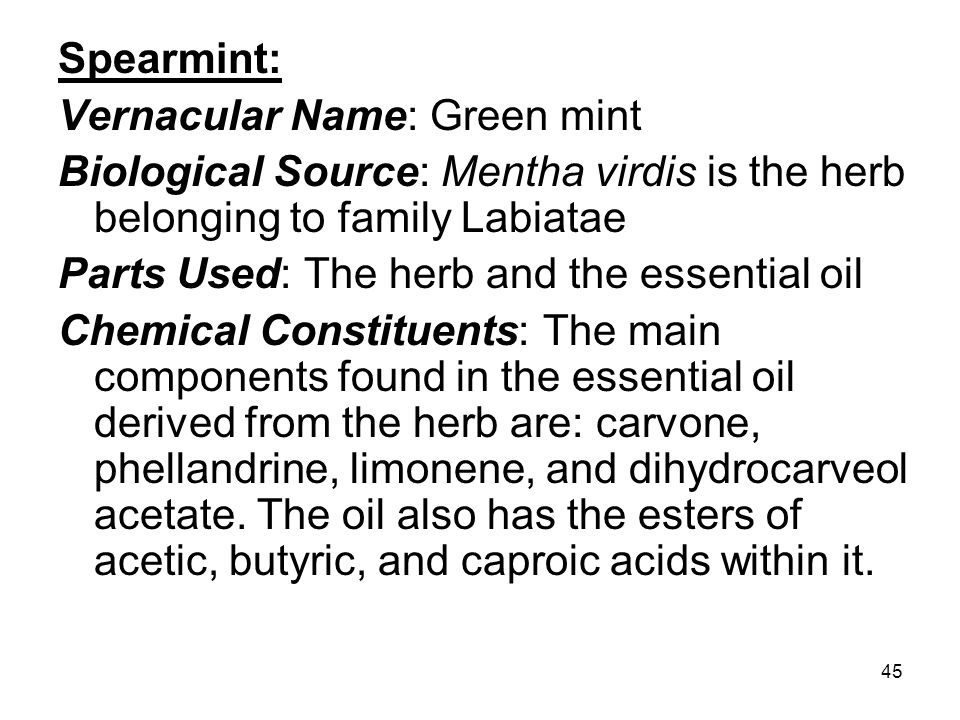 Spearmint: Vernacular Name: Green mint. Biological Source: Mentha virdis is the herb belonging to family Labiatae.