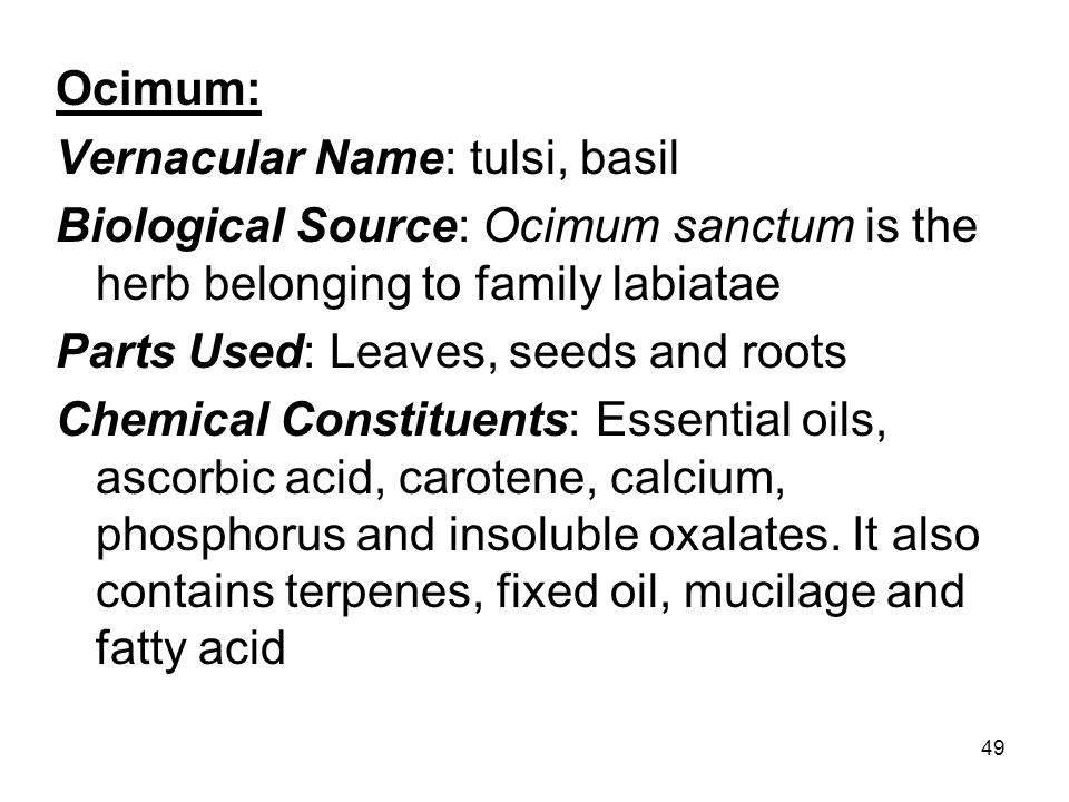 Ocimum: Vernacular Name: tulsi, basil. Biological Source: Ocimum sanctum is the herb belonging to family labiatae.