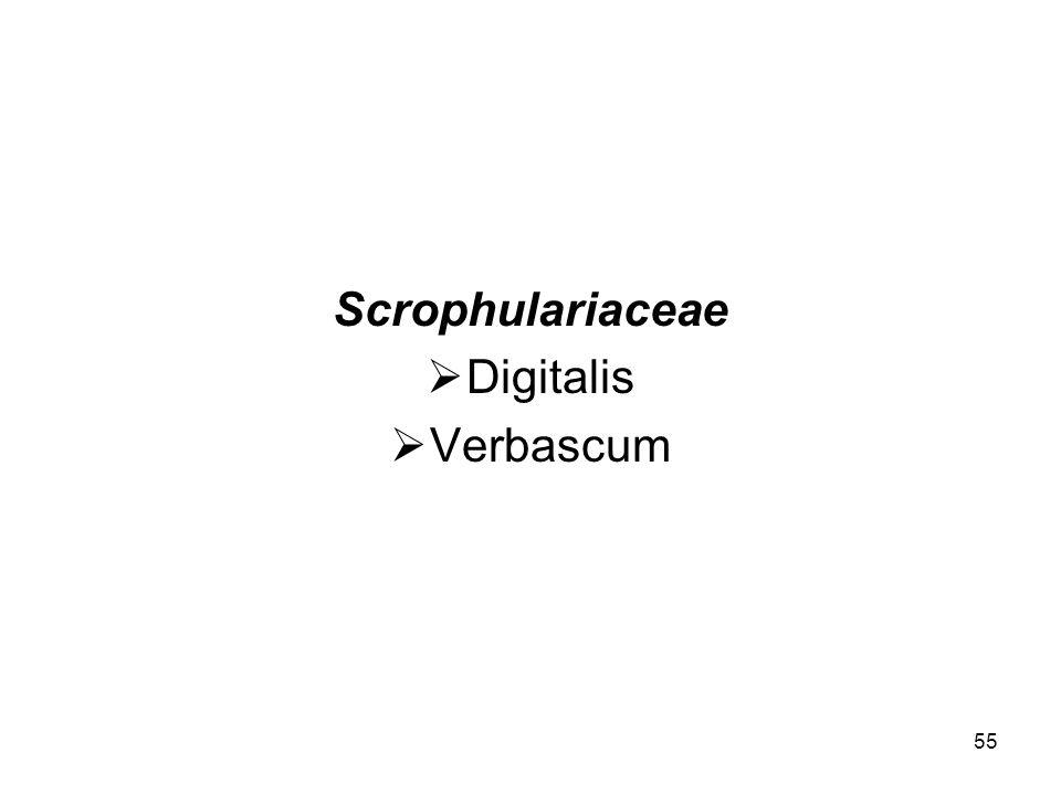 Scrophulariaceae Digitalis Verbascum