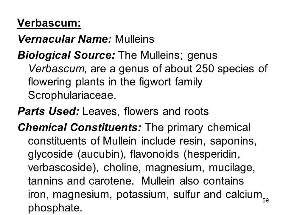 Verbascum: Vernacular Name: Mulleins.