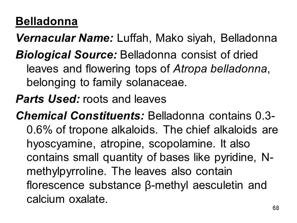 Belladonna Vernacular Name: Luffah, Mako siyah, Belladonna.