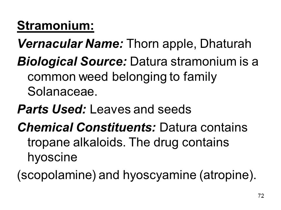 Stramonium: Vernacular Name: Thorn apple, Dhaturah. Biological Source: Datura stramonium is a common weed belonging to family Solanaceae.