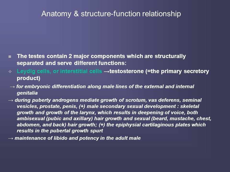 Anatomy & structure-function relationship