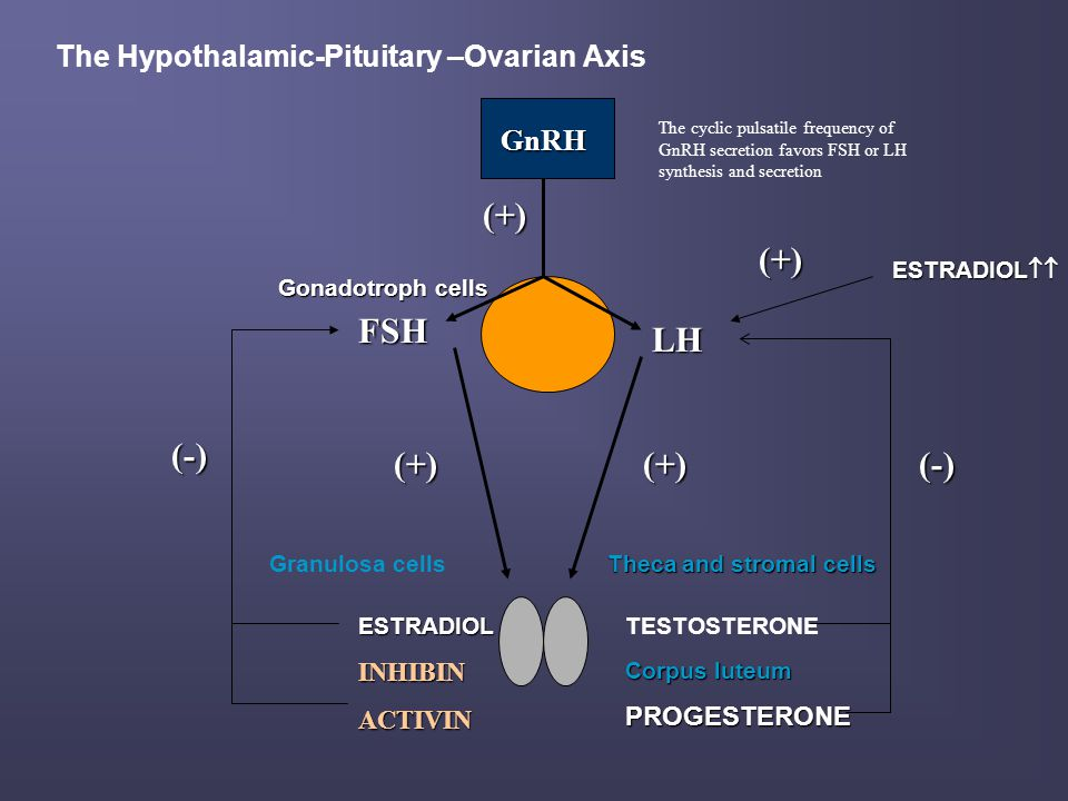 The Hypothalamic-Pituitary –Ovarian Axis