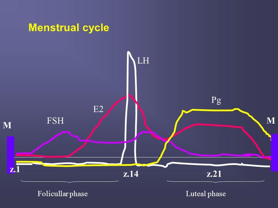 Menstrual cycle LH Pg E2 FSH M M z.1 z.14 z.21 Folicullar phase