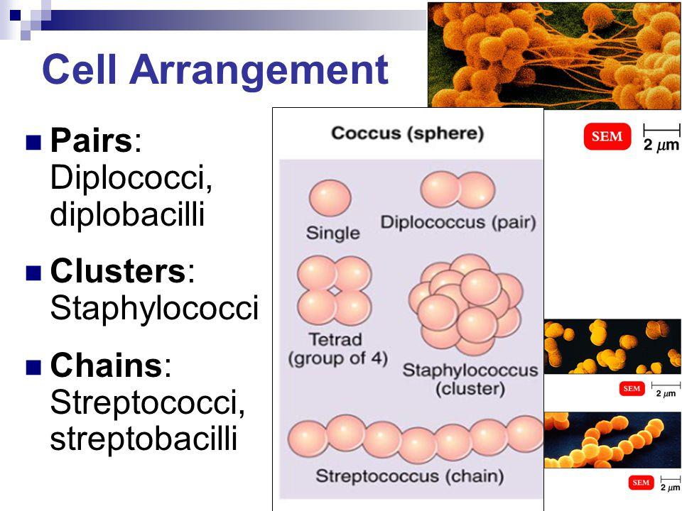 Cell Arrangement Pairs: Diplococci, diplobacilli