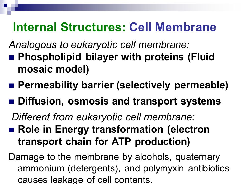 Internal Structures: Cell Membrane