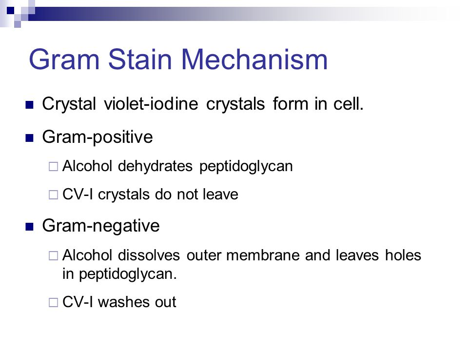 Gram Stain Mechanism Crystal violet-iodine crystals form in cell.