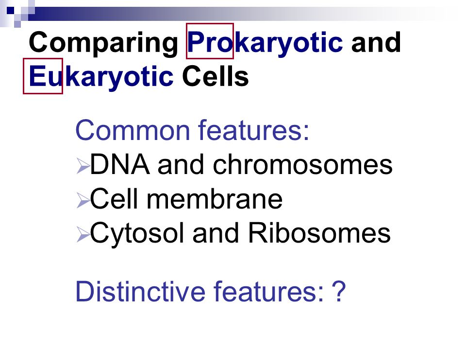 Comparing Prokaryotic and Eukaryotic Cells