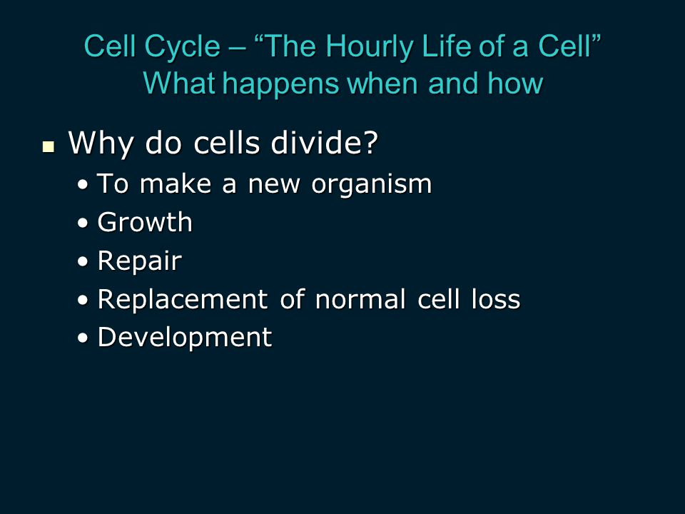 Cell Cycle – The Hourly Life of a Cell What happens when and how