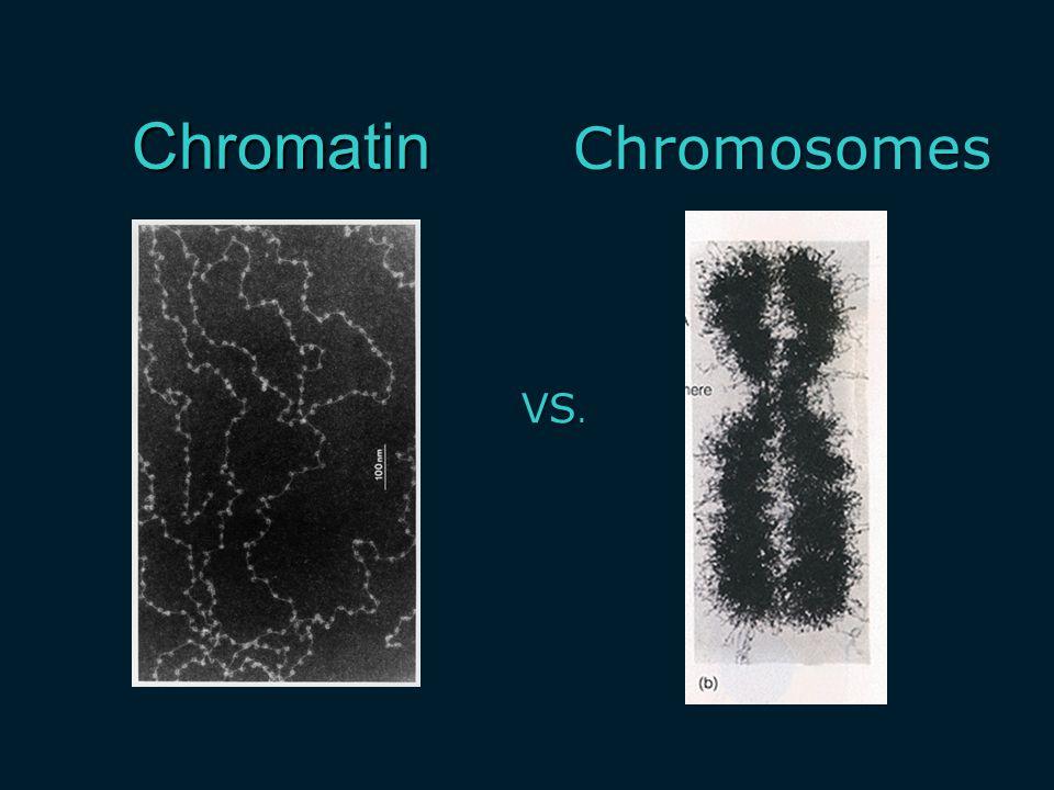 Chromatin Chromosomes VS.