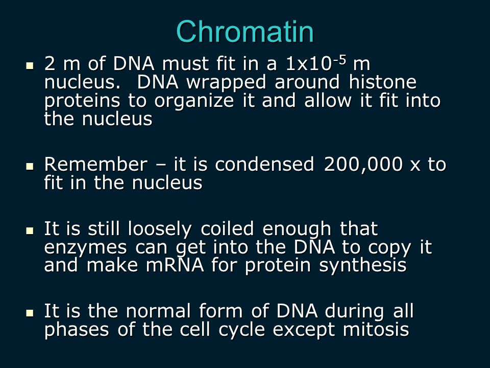 Chromatin 2 m of DNA must fit in a 1x10-5 m nucleus. DNA wrapped around histone proteins to organize it and allow it fit into the nucleus.