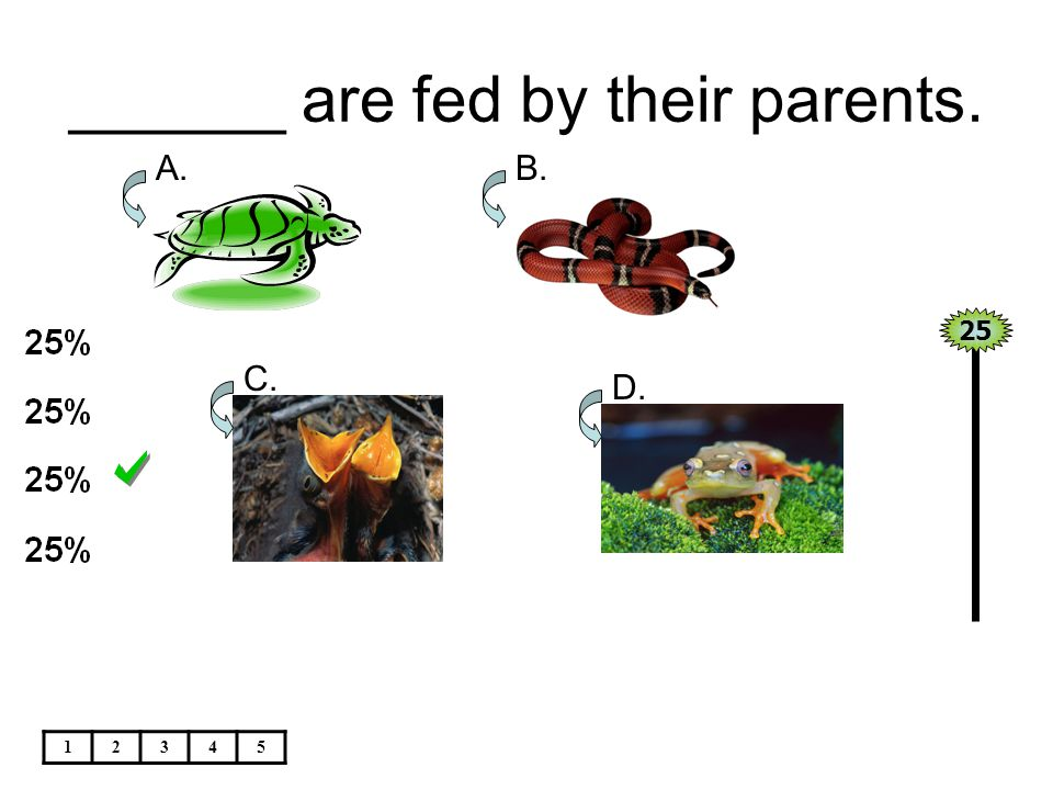 ______ are fed by their parents.