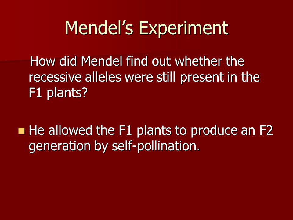 Mendel's Experiment How did Mendel find out whether the recessive alleles were still present in the F1 plants