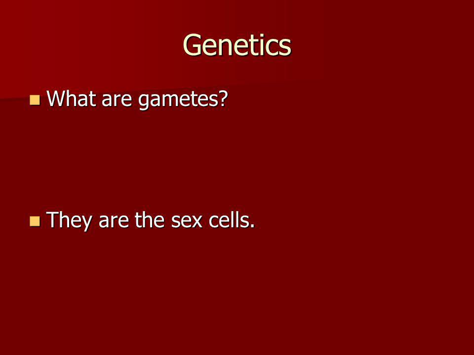 Genetics What are gametes They are the sex cells.