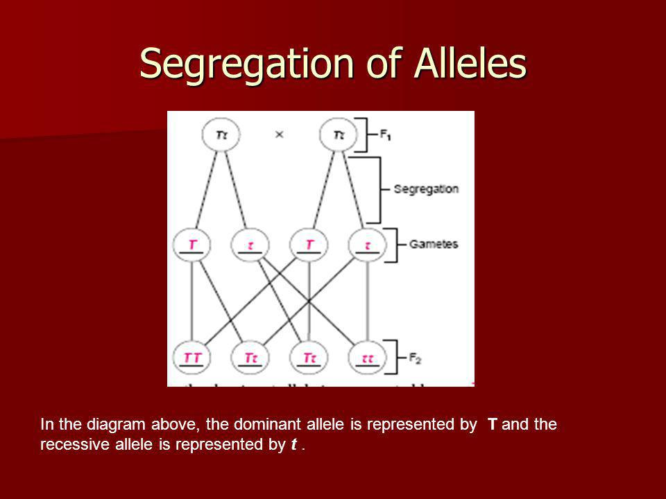 Segregation of Alleles