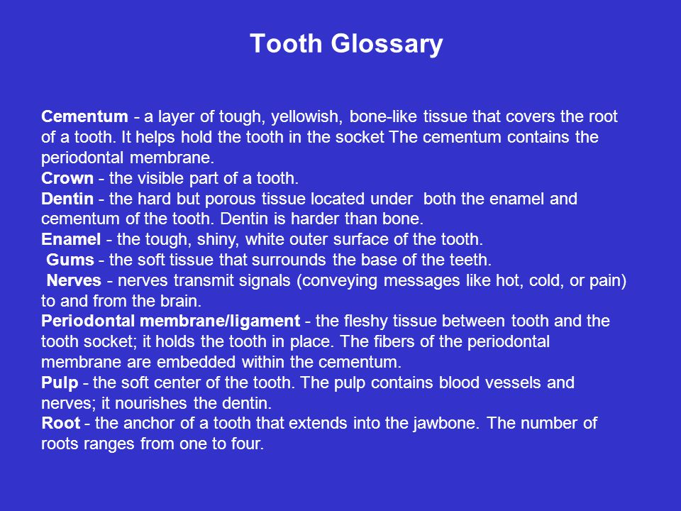 Tooth Glossary