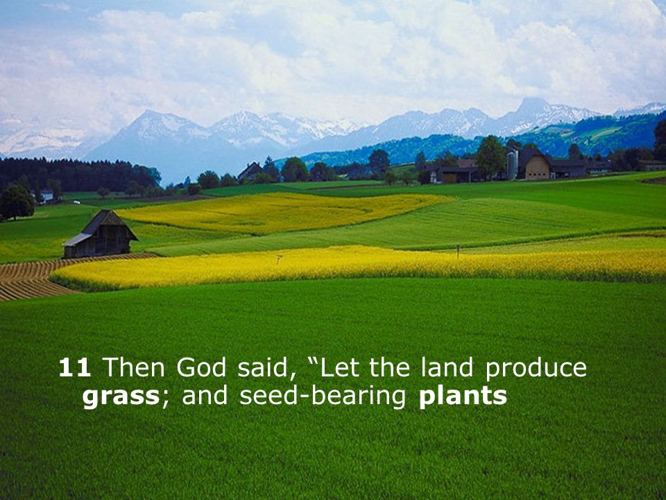 11 Then God said, Let the land produce grass; and seed-bearing plants