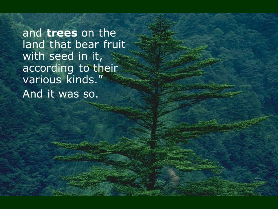and trees on the land that bear fruit with seed in it, according to their various kinds.