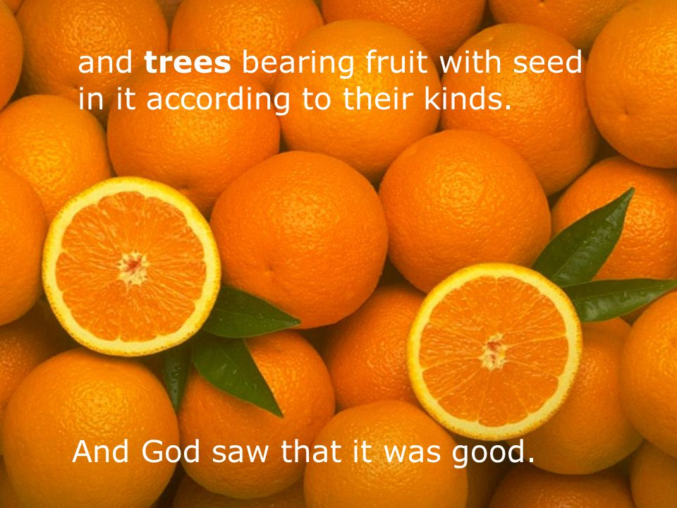 and trees bearing fruit with seed in it according to their kinds.