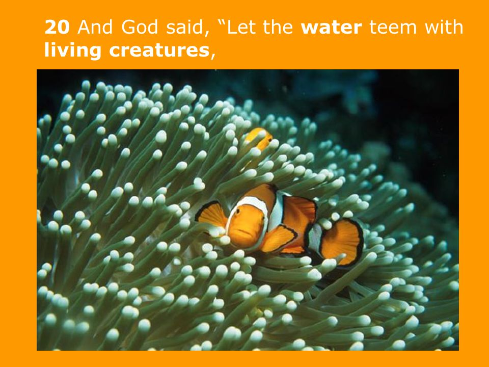20 And God said, Let the water teem with living creatures,
