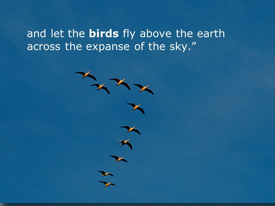 and let the birds fly above the earth across the expanse of the sky.