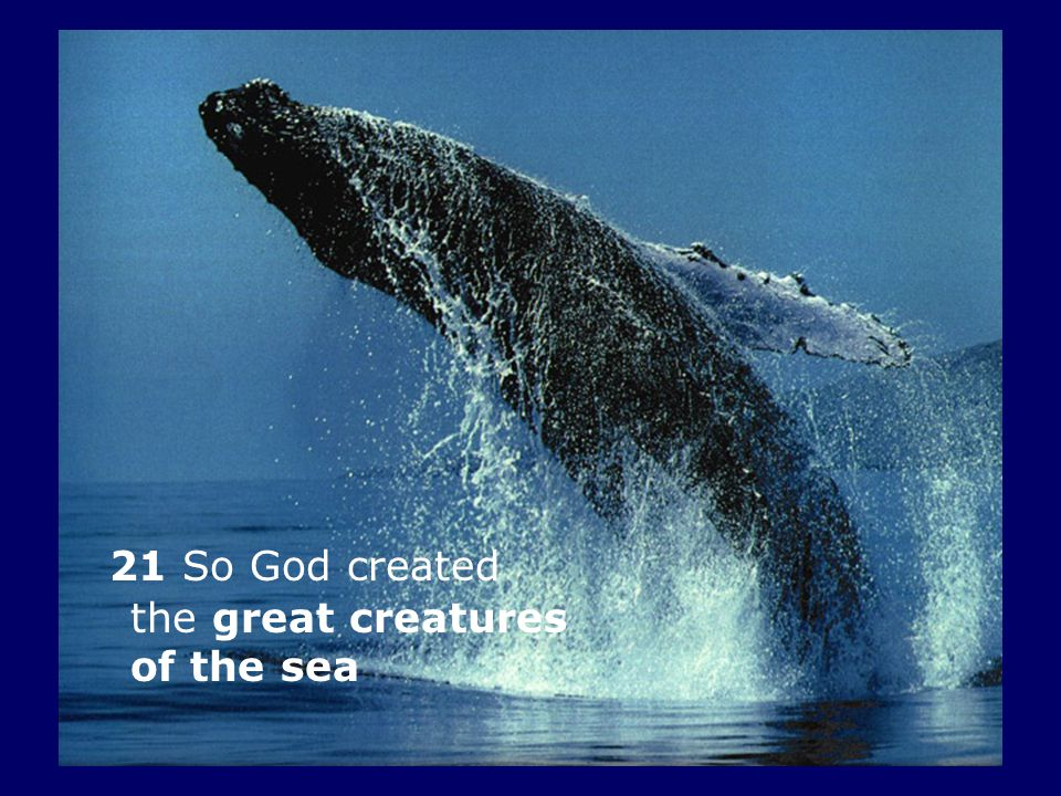 21 So God created the great creatures of the sea