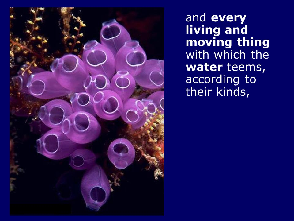 and every living and moving thing with which the water teems, according to their kinds,