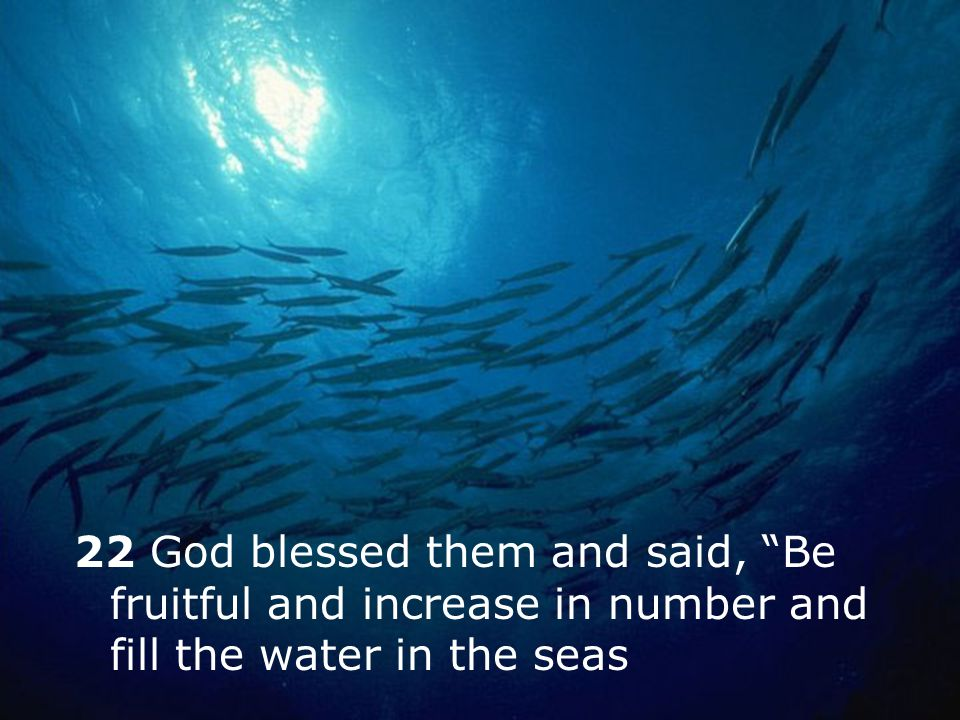 22 God blessed them and said, Be fruitful and increase in number and fill the water in the seas