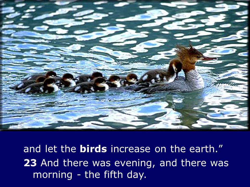 and let the birds increase on the earth.