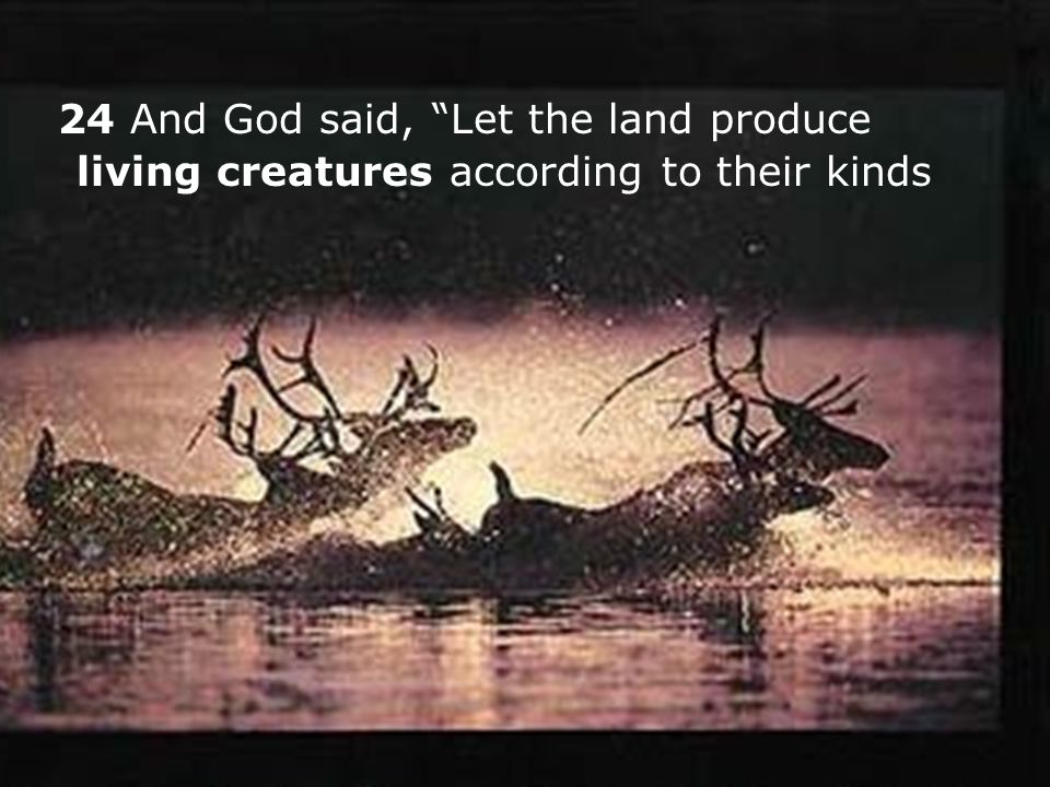 24 And God said, Let the land produce living creatures according to their kinds