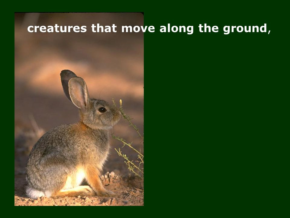 creatures that move along the ground,