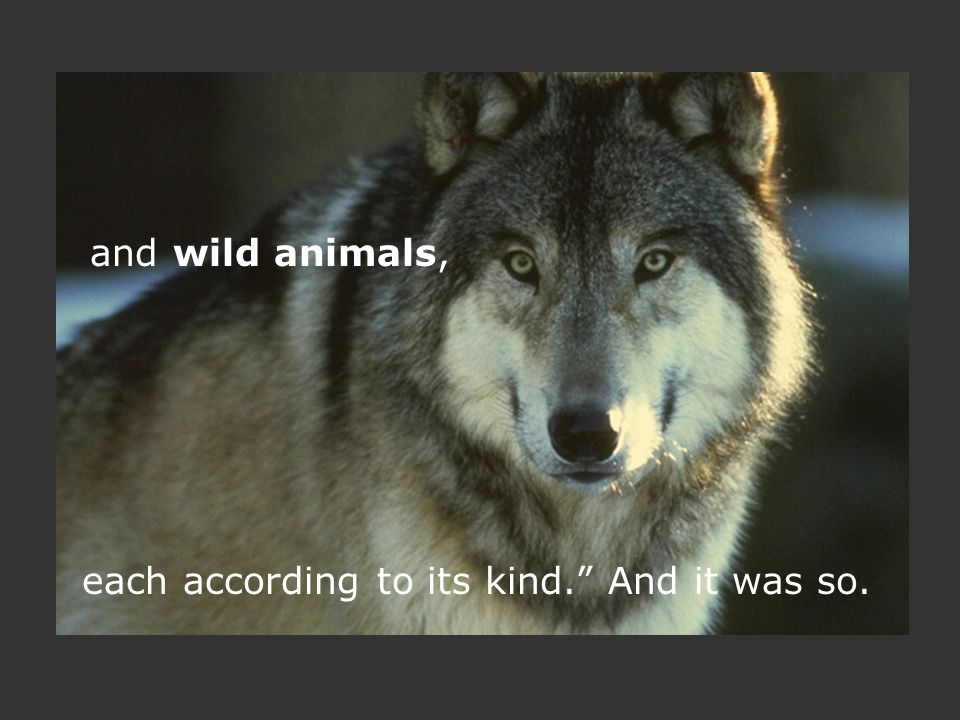 and wild animals, each according to its kind. And it was so.